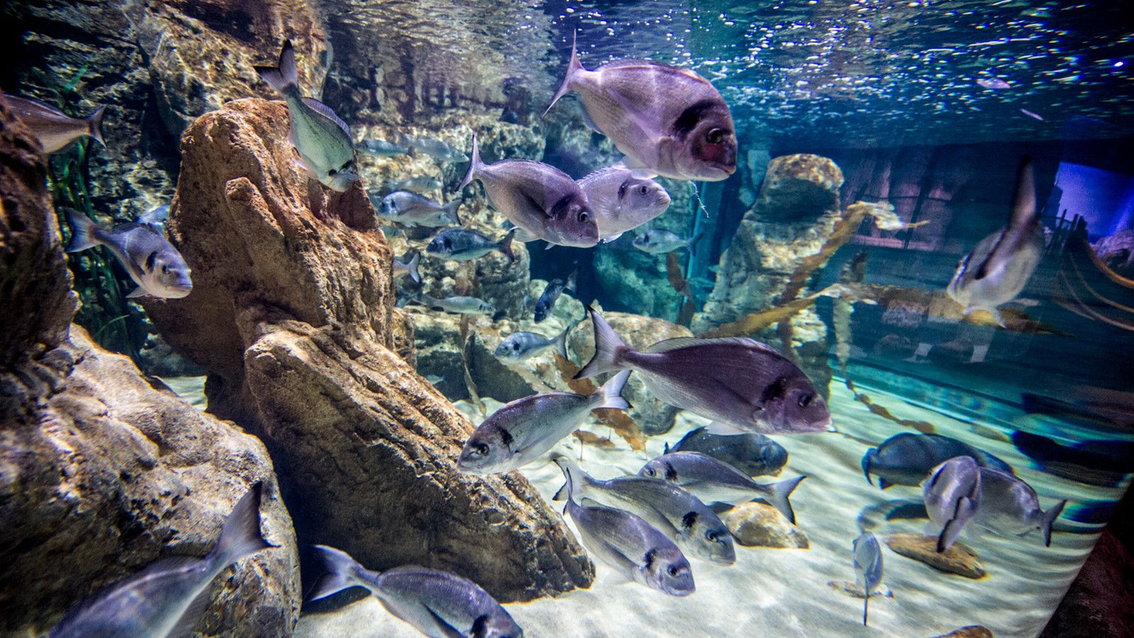 Aquarium in Malta